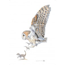Within An Owls Reach A3 Print